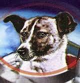 Cuori di cani… russi